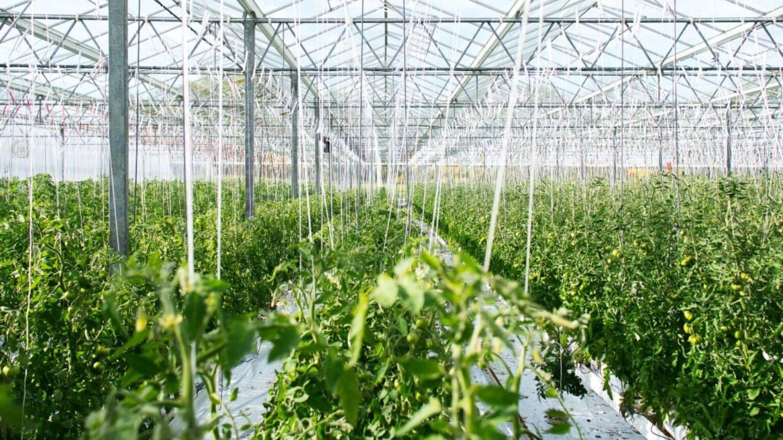 Cómo monitorear invernaderos agrícolas en tiempo real