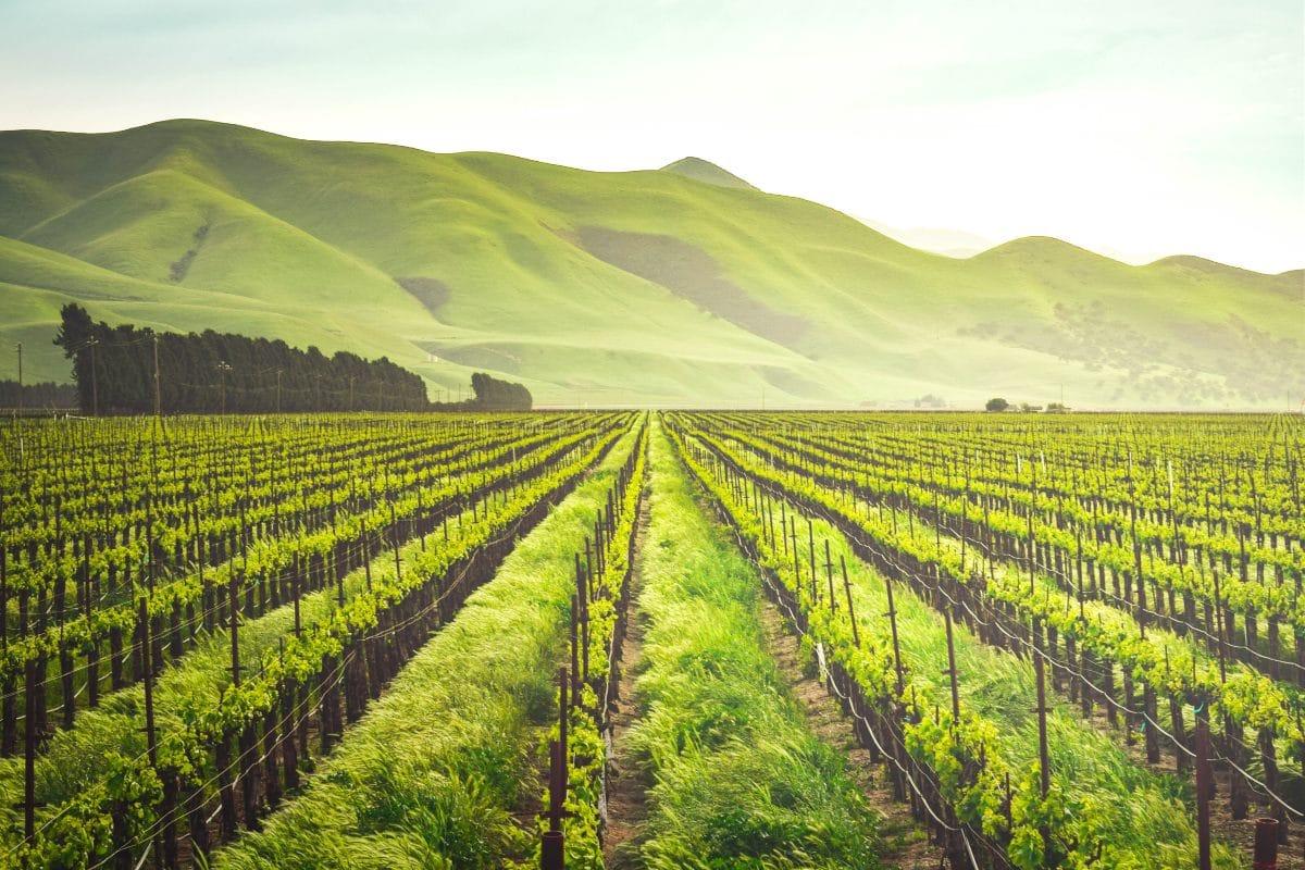 ¿Qué tipos de sensores se usan en la agroindustria? Parte 1