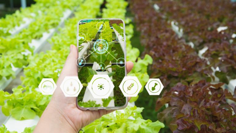 Trazabilidad agrícola: una herramienta eficiente para el productor