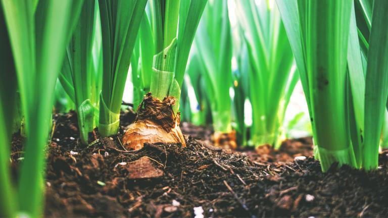 10 sensores IoT en agricultura para control de procesos