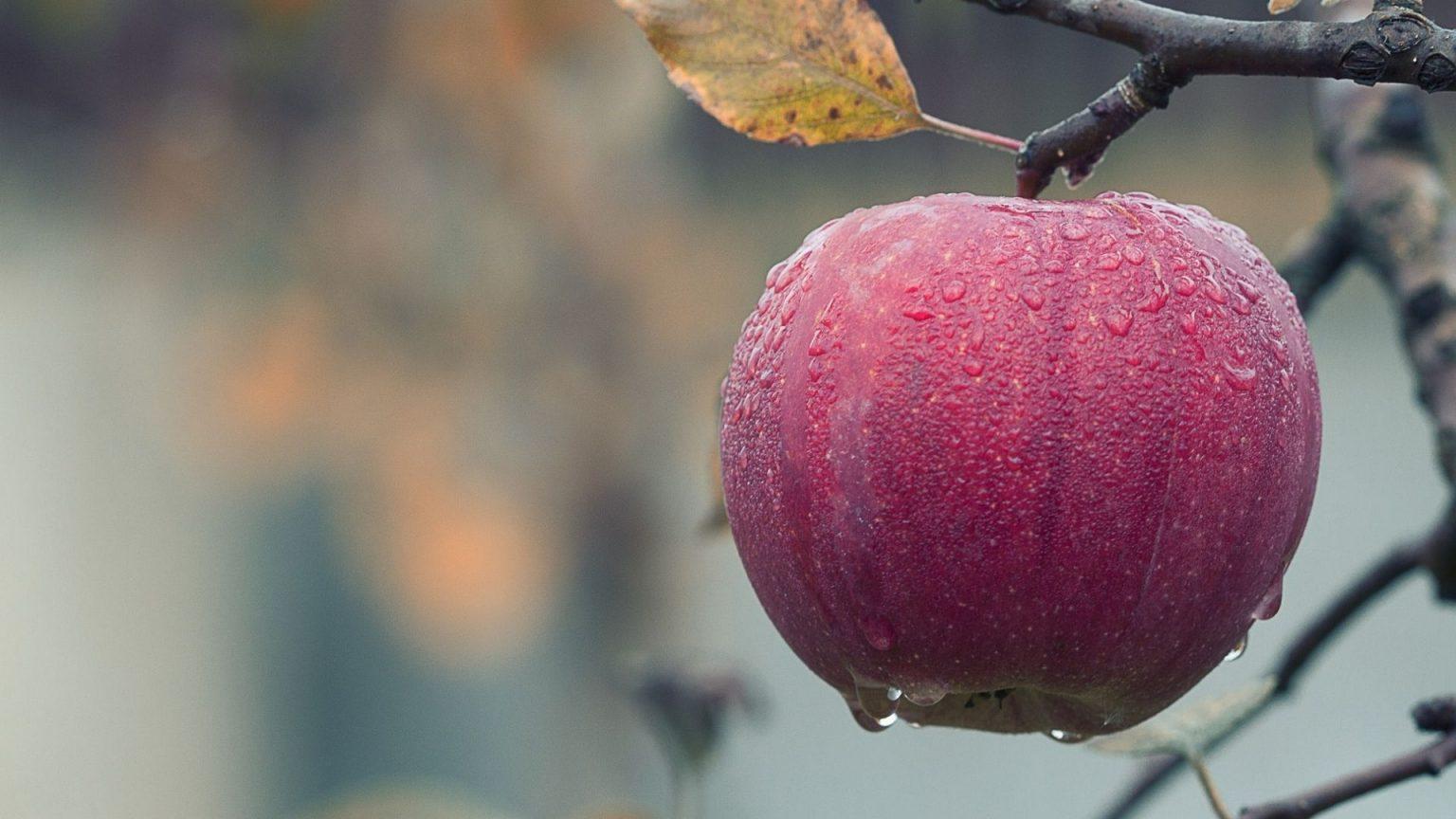 ¿Cómo monitorear el crecimiento de la fruta?