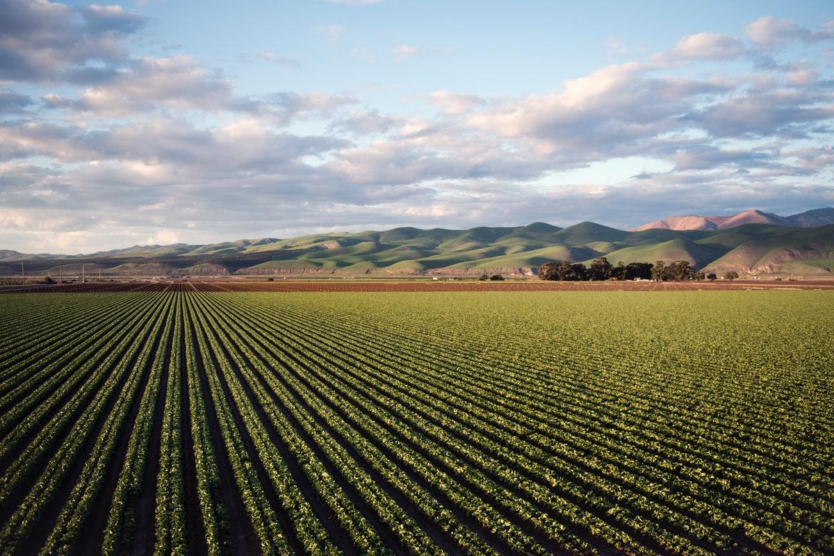 Importancia del control de cultivos agrícolas