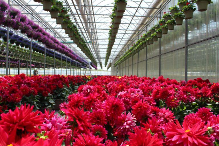 4 formas de ahorrar energía en la floricultura